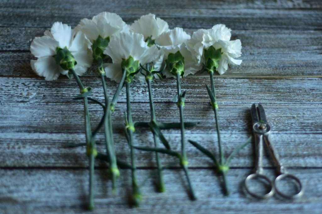 Scheduling time to Cut Fresh Flowers is a wonderful way to improve your gardening experience.