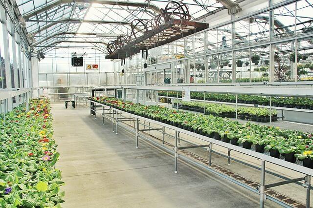 A Greenhouse Garden