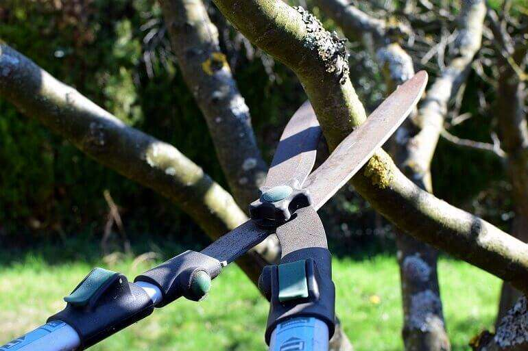 How to Prune Flowers, Shrubs, and Trees