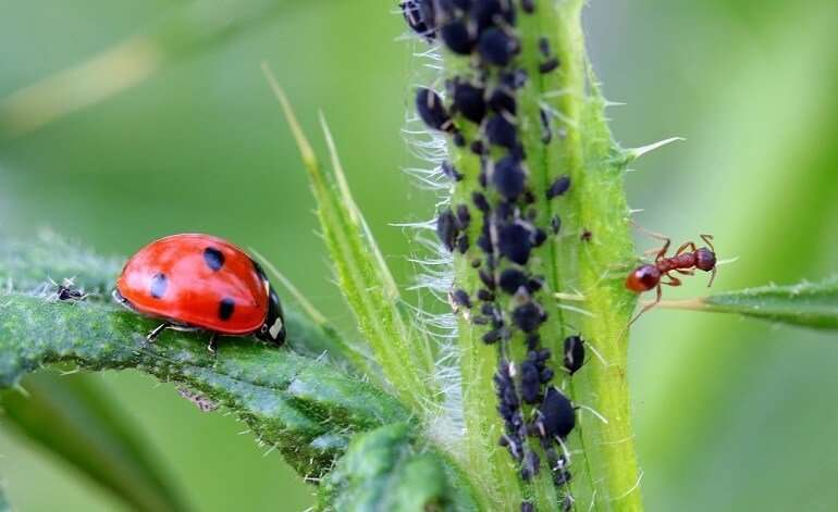 Natural Strategies to Control Garden Pests