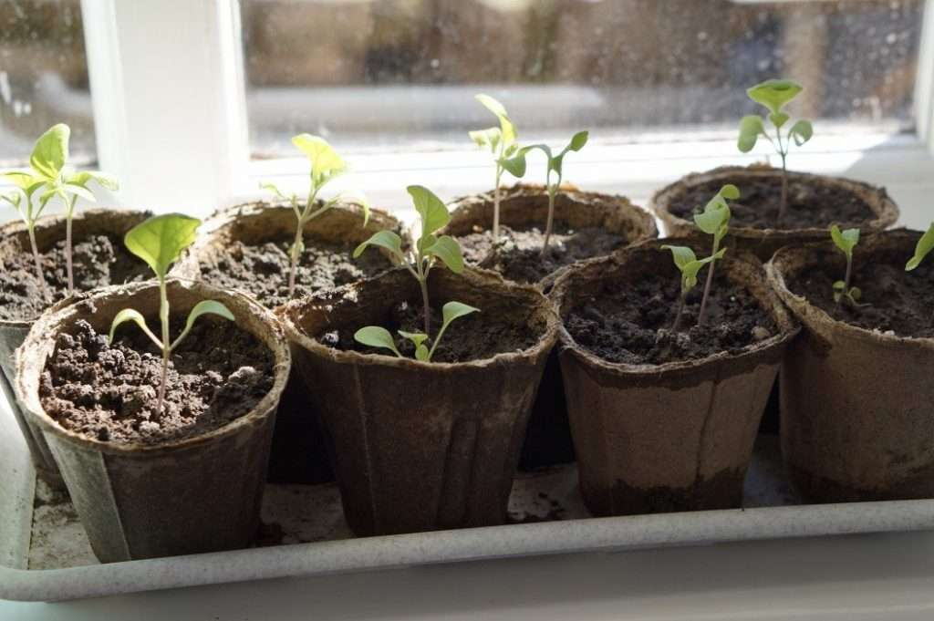 Further improve your gardening experience by seed starting in your downtime.