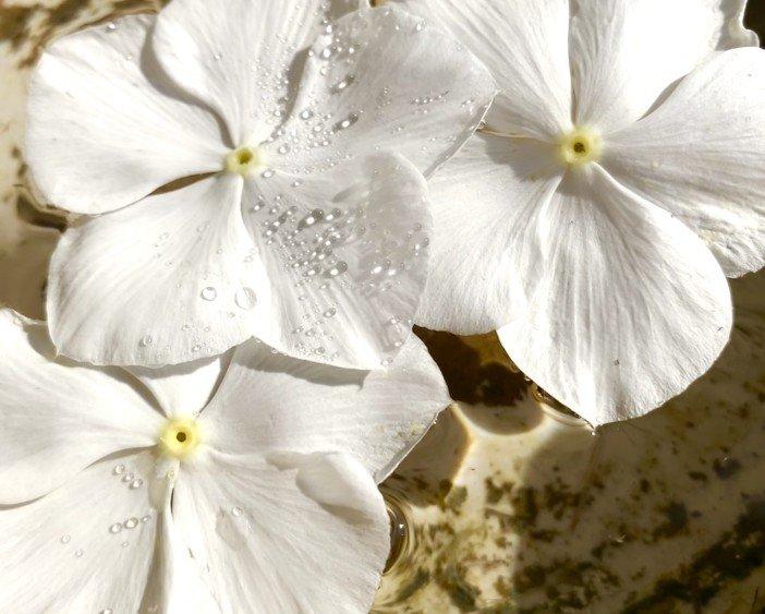 Vincas Flowers are Excellent for Landscaping