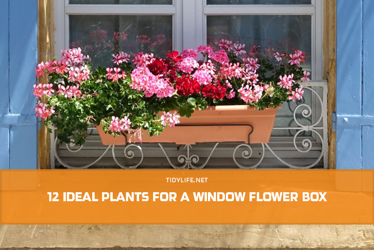 12 Ideal Plants for a Window Flower Box